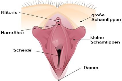 Die Klitoris der Frau ist das weibliches Zentrum der Lust